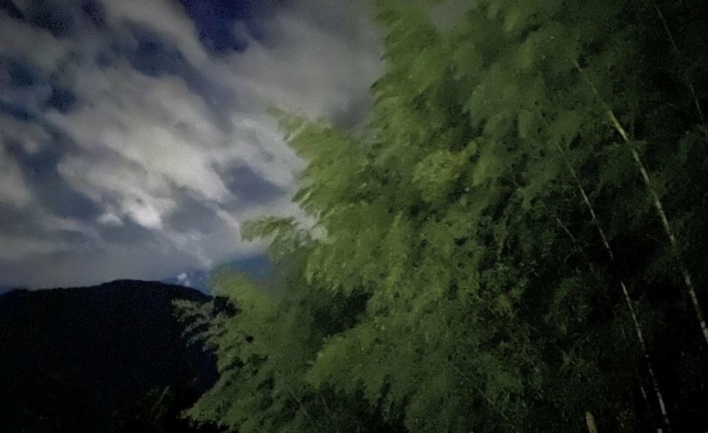 Bamboo at night in Yugawara