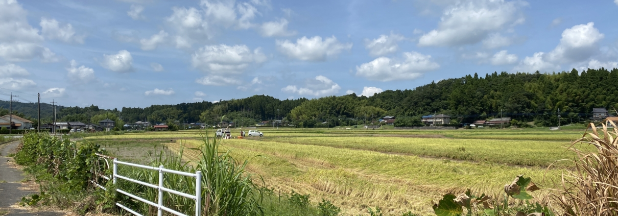 Rice fields of Nagara
