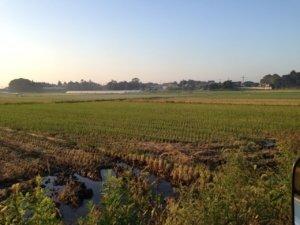 Ibaraki farmland
