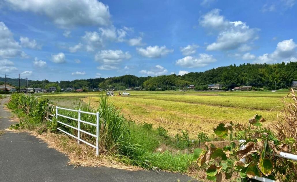 Nagara rice fields