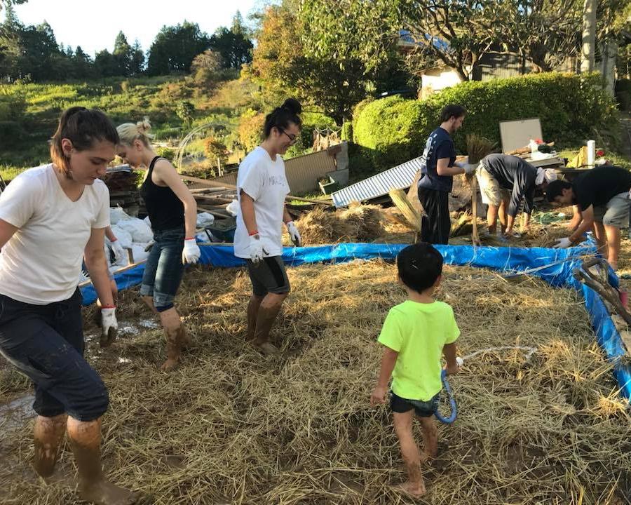 Fujino farm